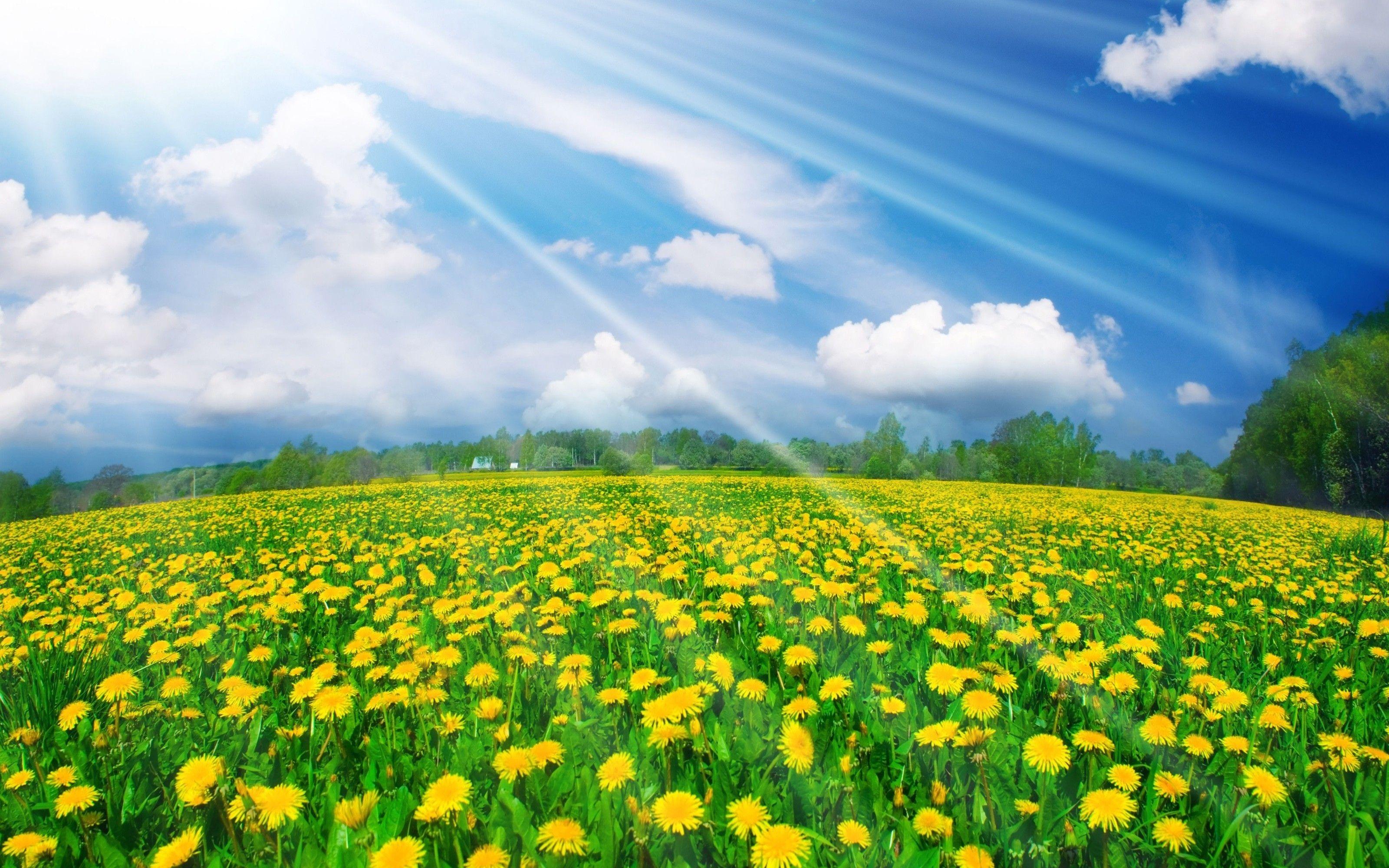 flores de campo en hd gratis para bajar 6 hd wallpapers | exson