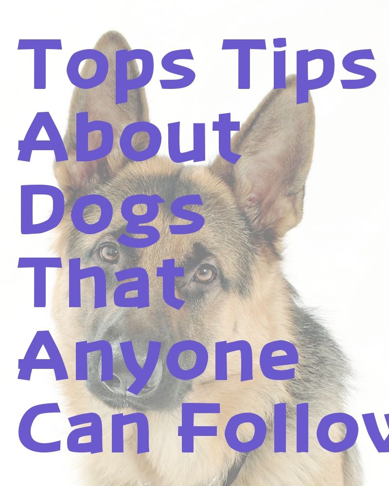 Do you own a dog read these tips choosing a dog pet
