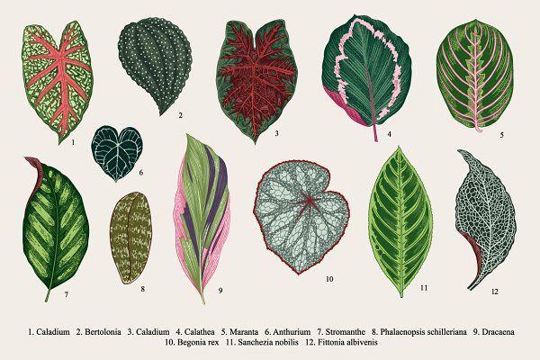33 Exotic leaves - Illustrations #elephantearsandtropicals
