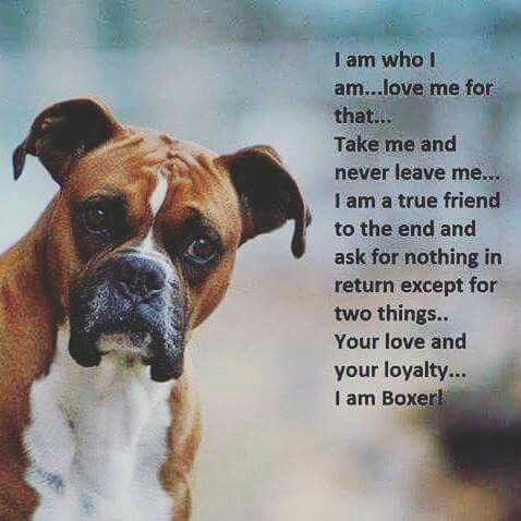 So True Boxer Dog Quotes Boxer Dog Puppy