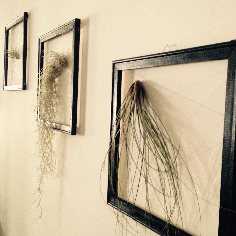 Luftpflanzen, tillandsien, perfekte Raum-Wand-Begrünung | Meine ...