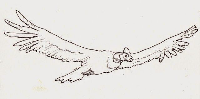 Filanaval Animales En Peligro De Extinción El Condor Grunge