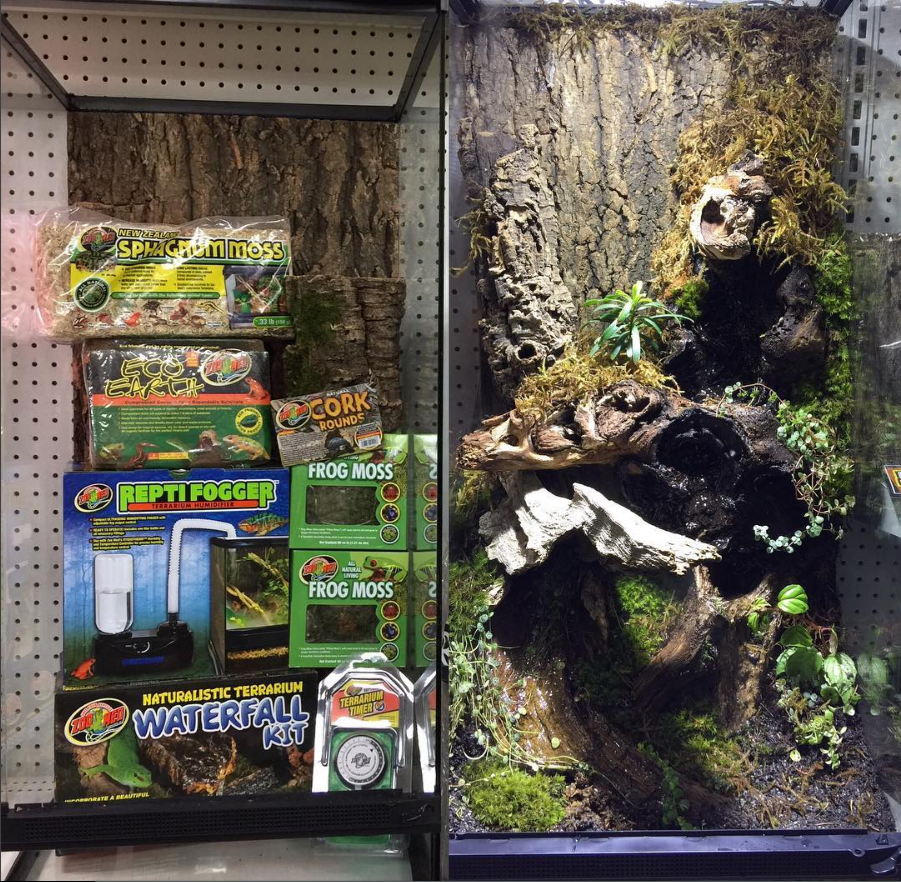 Before and after zoo med skyscraper terrarium with cork live plants