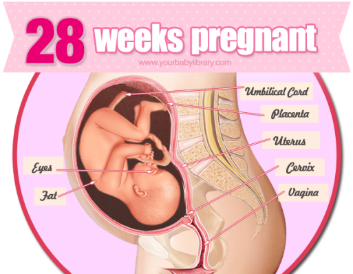pregnant weeks 28 pain vagina in