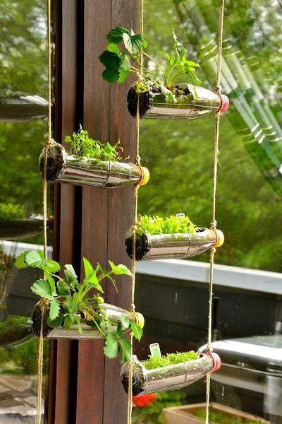 Jard n vertical colgante con botellas de pl stico ser for Jardin vertical colgante