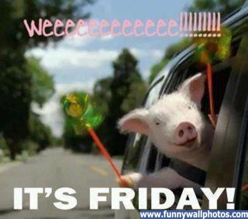 Its Friday Funny: Comment On This Picture It S Friday