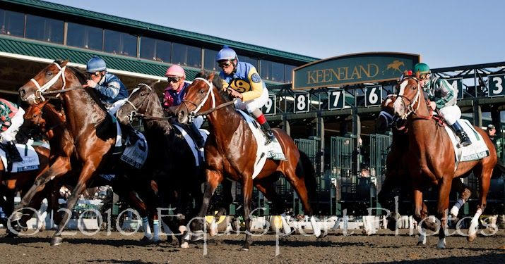 'Capture The Light' Photo: Horse Racing's Need for Speed - 4 Photography Tips
