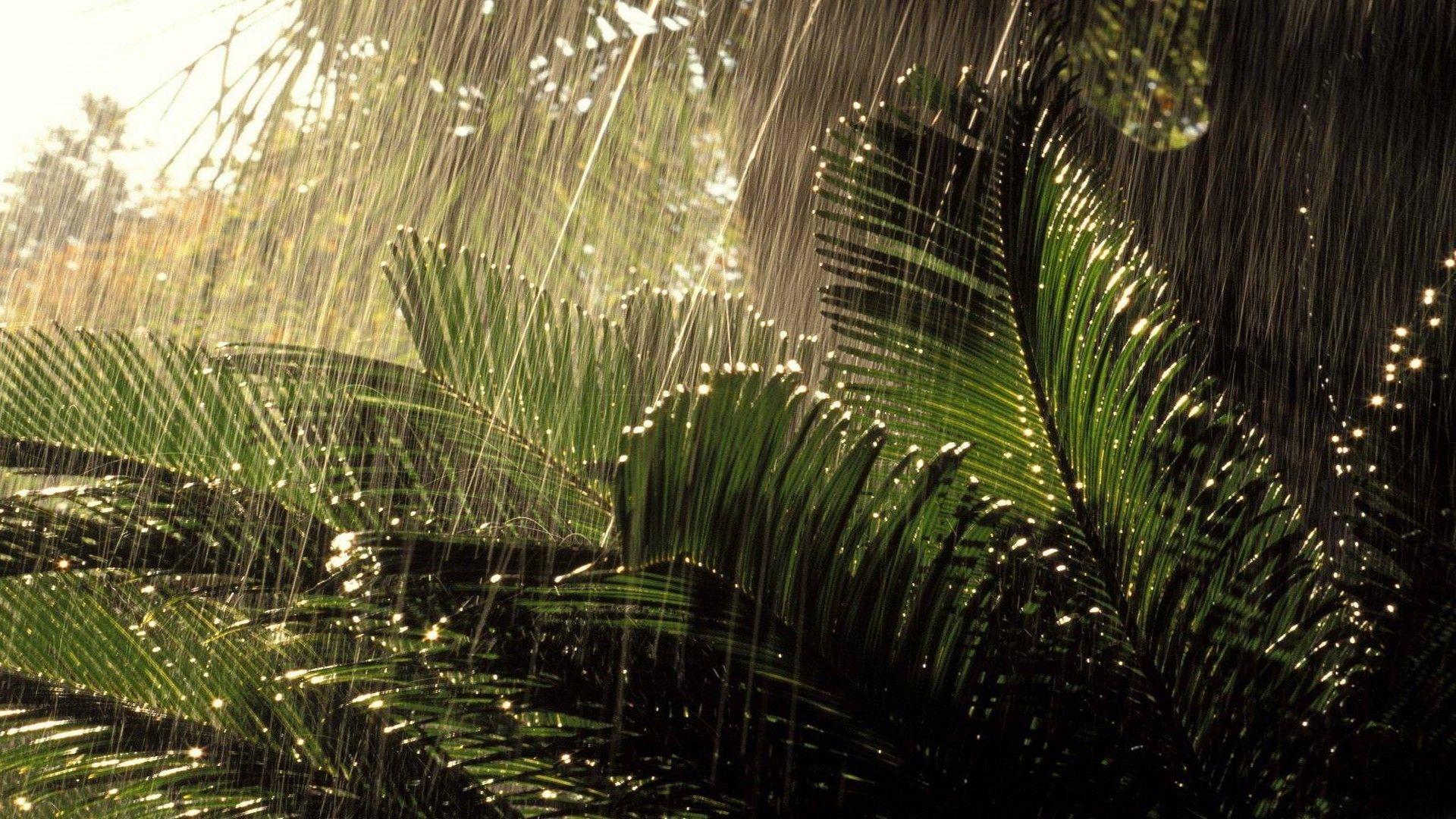 Nature Wallpaper Rainy Season Natural