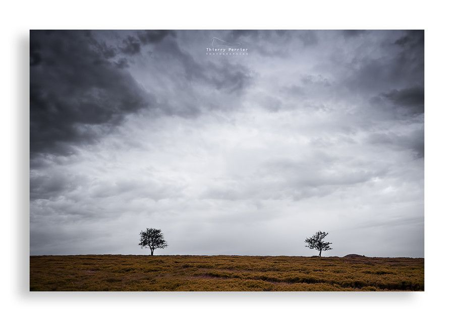 Trees by Thierry Perrier on 500px