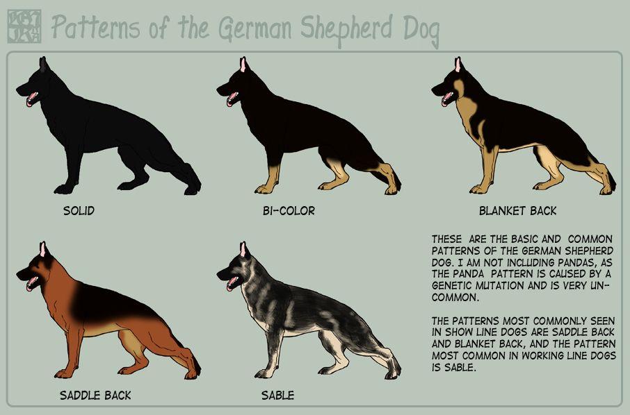 German Shepherd German Shepherd Colors German Shepherd Dogs German Shepherd