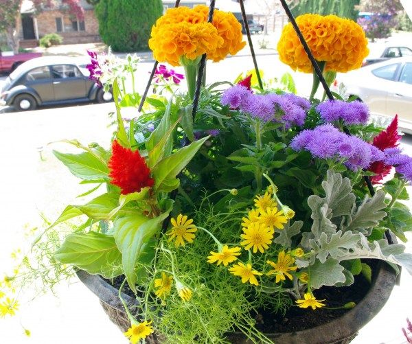 colorful containers! #garden #container #flowers