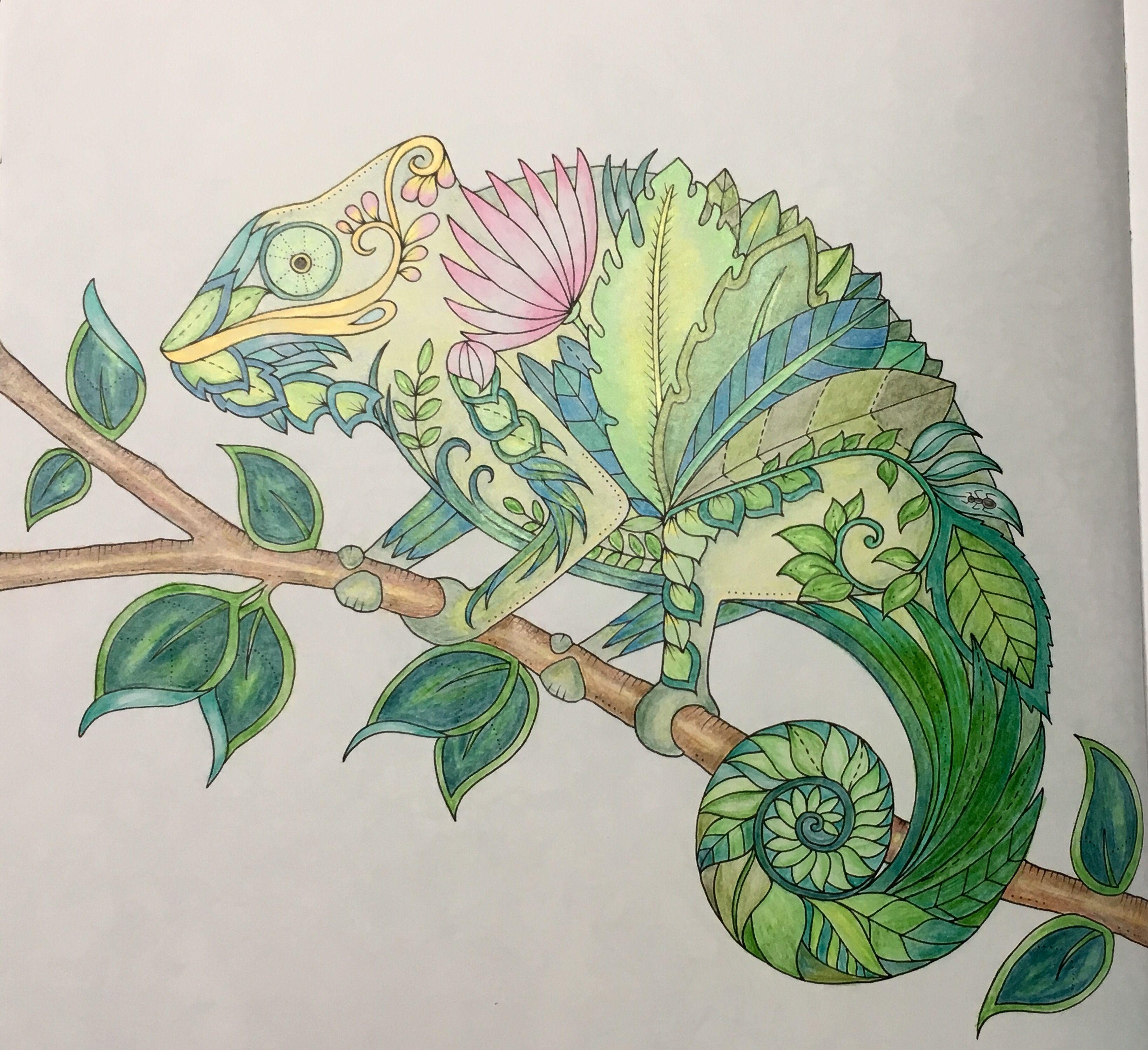 Johanna Basford Coloring Book Chameleon Books Colouring Tropical Paradise Pencil