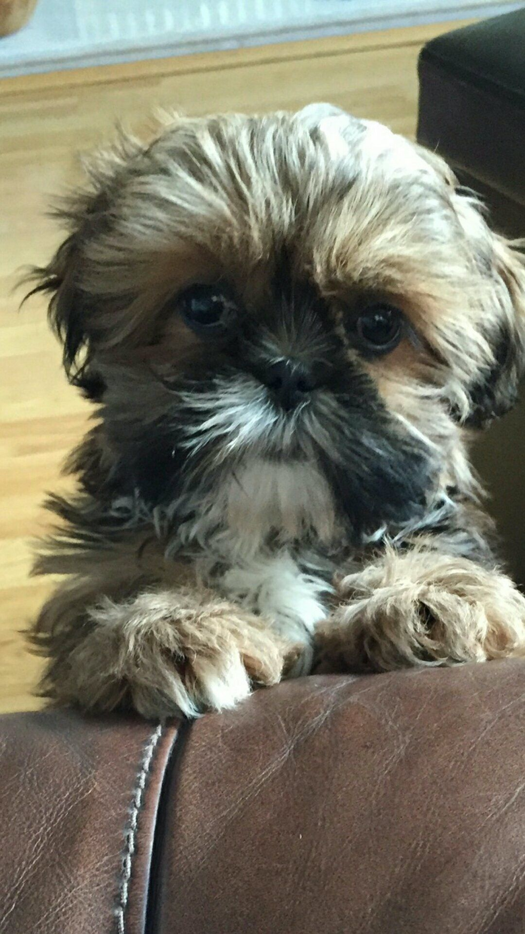 Pin By Y Not W On Animal Pics Animal Pictures Animals Shih Tzu