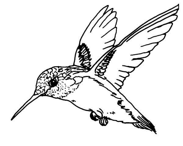 Flying Magnificent Hummingbird Coloring Page kids crafts
