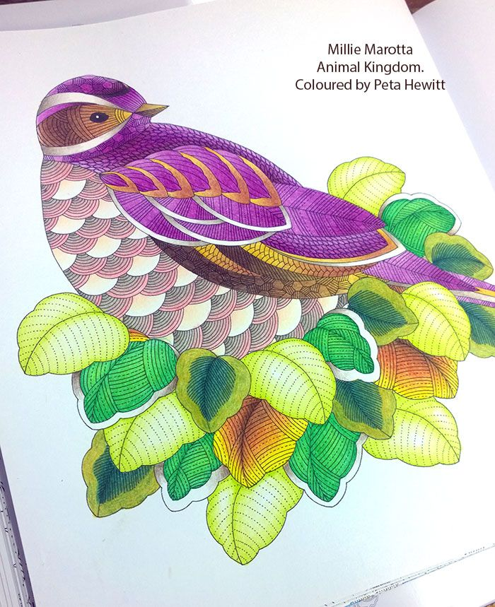 Animal Kingdom Coloring Book : Purple Bird. testing the Mitsubishi Uni 888 Pencils. La Artistino Peta Hewitt animal ...