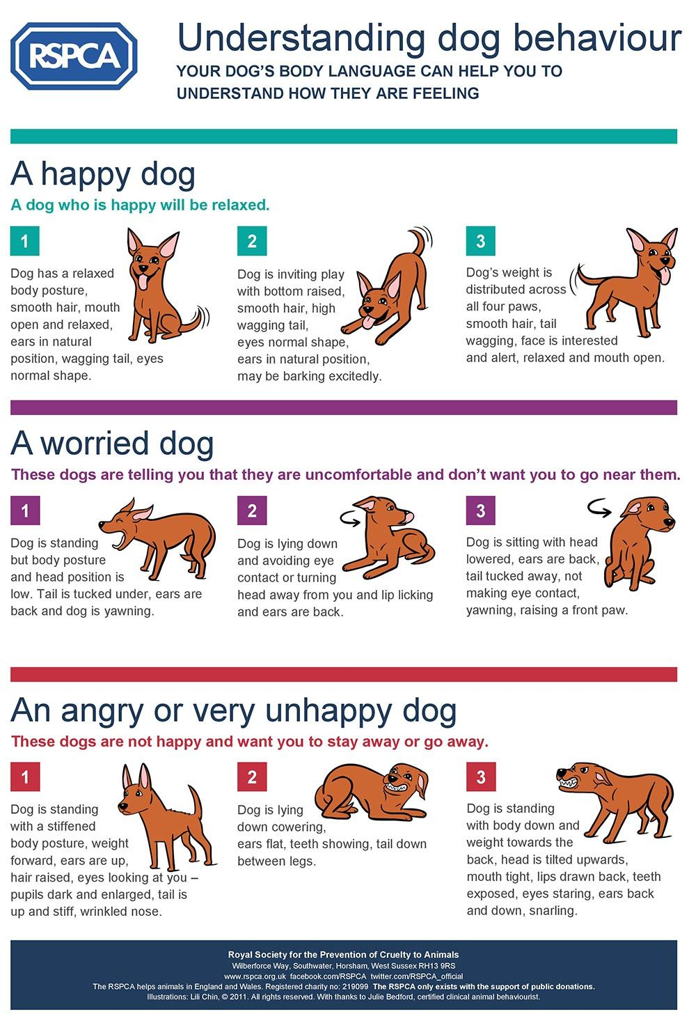 Smart Advice For Caring For Your Dog Dog Body Language Dog