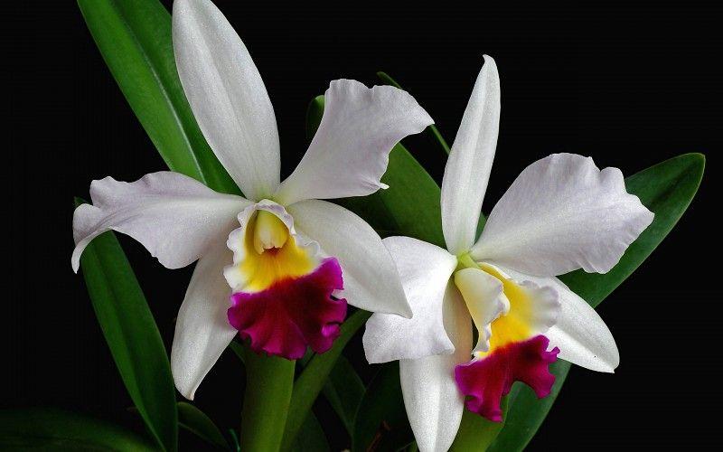 Resultado De Imagen Para Orquideas Hermosas Para Fondo De