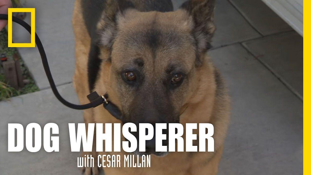 Learning The Leash Dog Whisperer Dog Whisperer Dogs Dog Leash