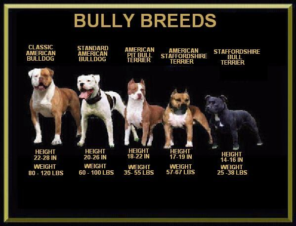Pin On Ban The Deed Not The Breed