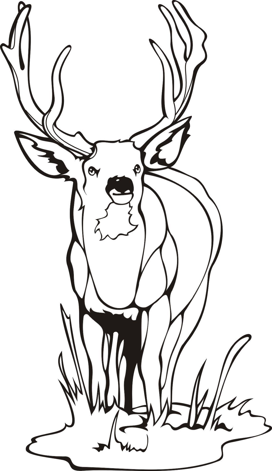 Deer coloring pages…   Cérvol   Pinterest   Caza, Colorear y Vidrio
