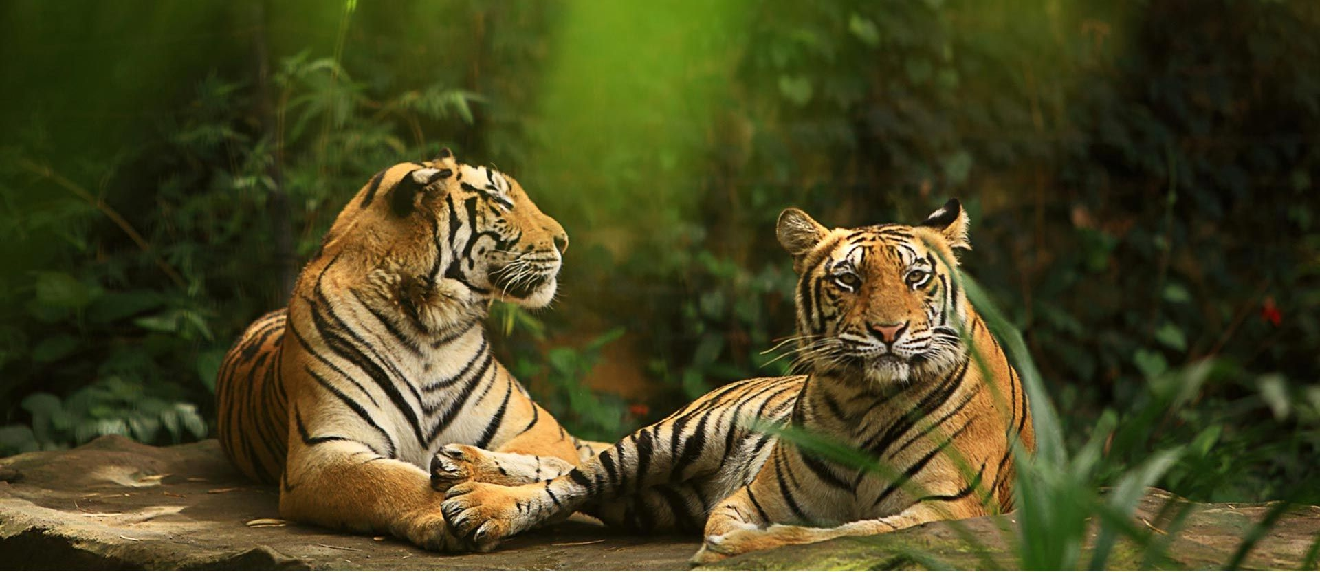Bali Zoo - Love. Conserve. Share