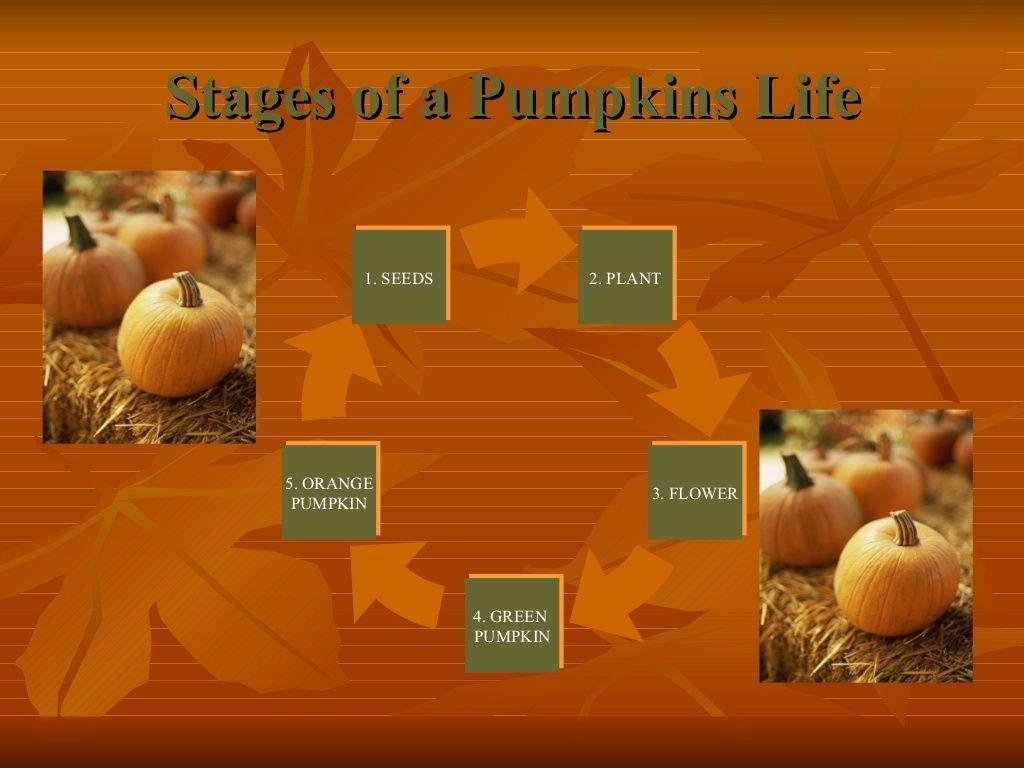 The Pumpkin Life Cycle   School   Pinterest