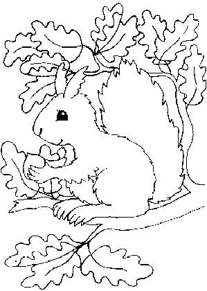 Veverky Pro Veverusky Art Drawings For Kids Coloring Pages Princess Coloring