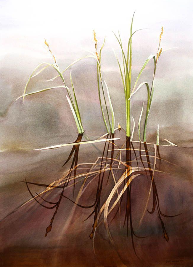 Watergrass study n.7