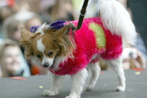 Woofstock - June on the Cheap! - Toronto4Kids