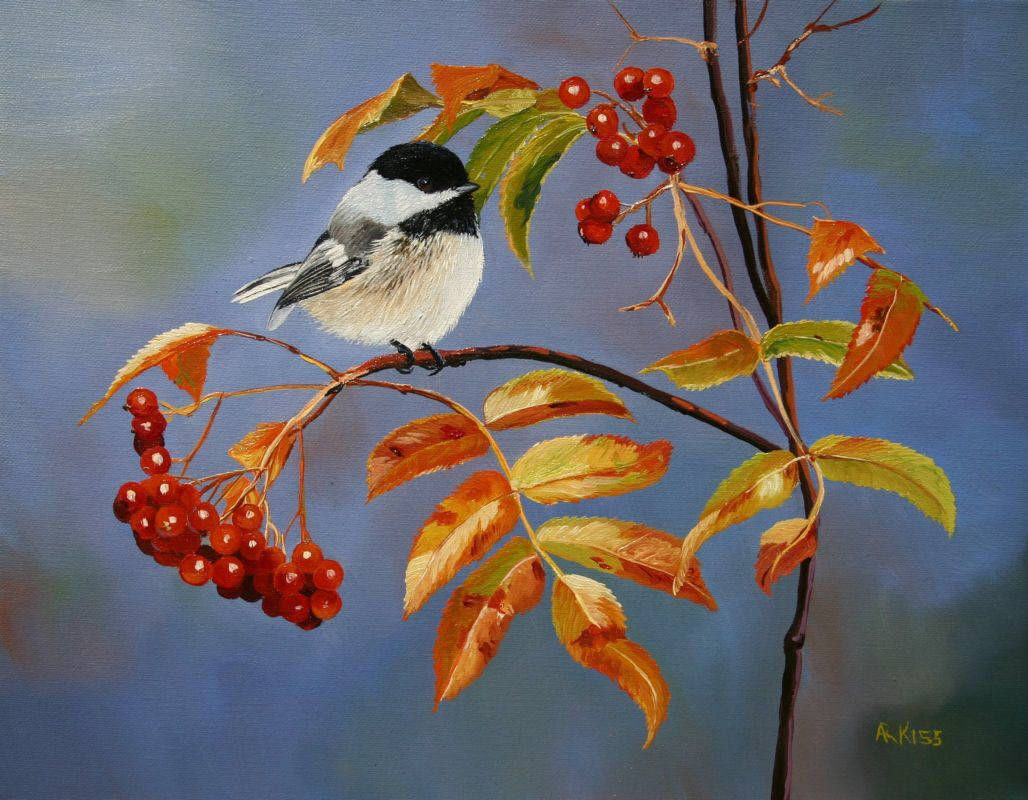 Andrew_Kiss_Chickadee_on_Mountain_Ash_4114_355.jpg (1028×800)