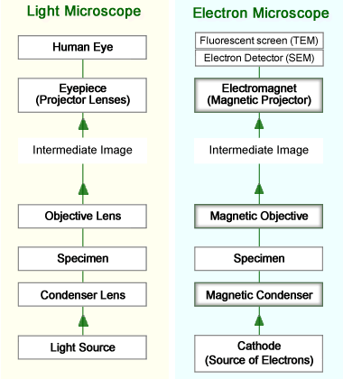 difference between light and electron microscope ppt