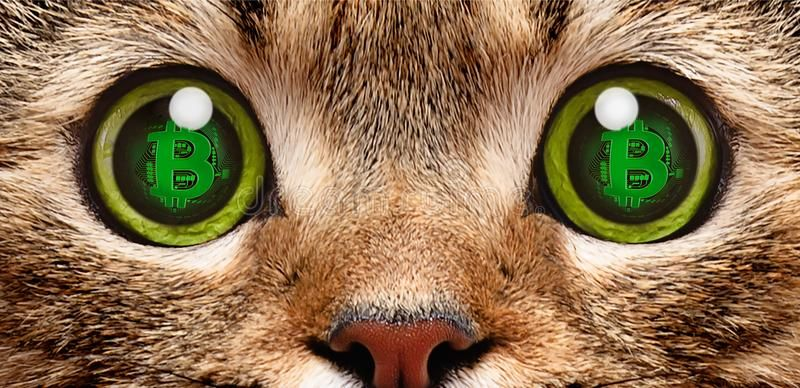 Portrait Of A Cat In Whose Eyes A Symbol Of Bitcoin Stock Photo