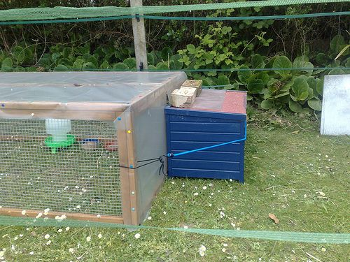 broody hen pen and chick run inside larger poultry pasture