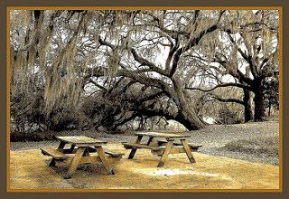 Tables under old trees    -  sepia | by snow41