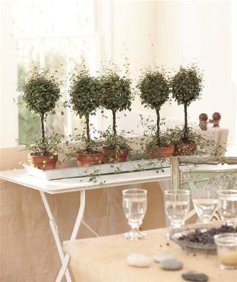 Decorating with #plants and #flowers - from #MSNGlo