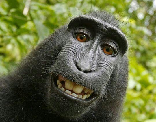 Scimmiotto