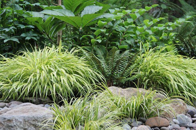 contemporary landscape by Bliss Garden Design - golden variegated sweet flag (Acorus gramineus 'Ogon')