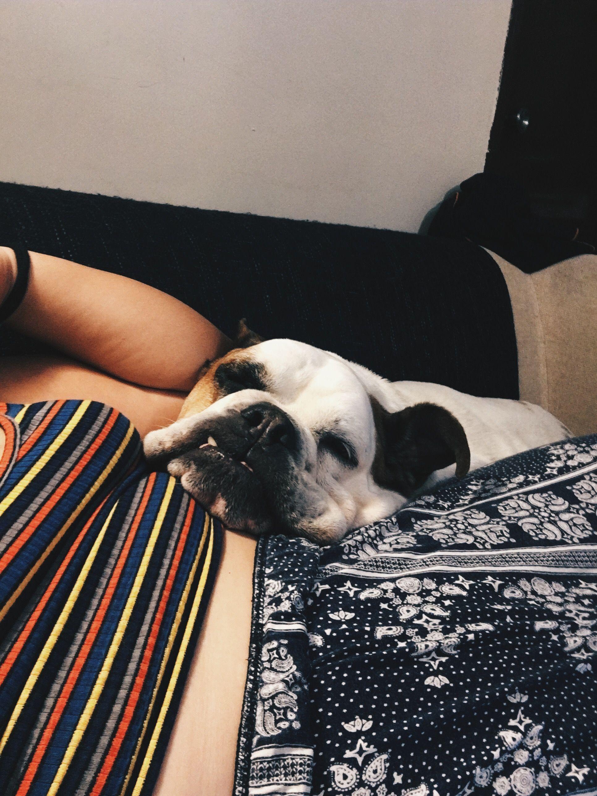 English Bulldog Puppies Puppy Care Frenchie British Ingles Anglais