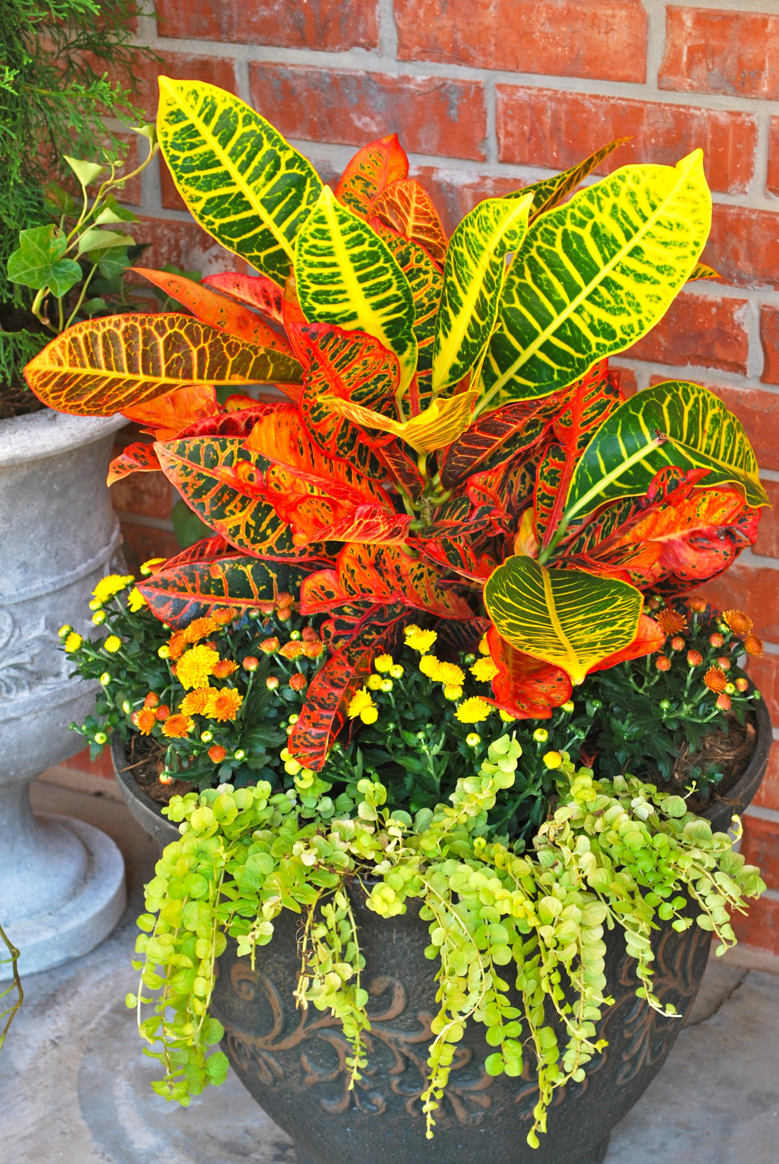 Bring On The Fall Colors Containergardening Fallcontainergardens Fall Curbappeal Adornok Fall Container Gardens Container Garden Design Garden Containers