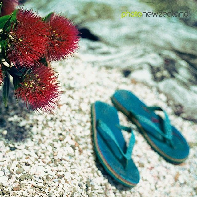 Image of the Day - Blue jandals on a beach beside red pohutukawa flowers (New Zealand Christmas tree) Image by Kim Christensen #kcphotonz #jandals #kiwiana #classickiwi #nzicon #nz #summerbreak #summer #newzealand #photonz #photonewzealand #potd #photooftheday