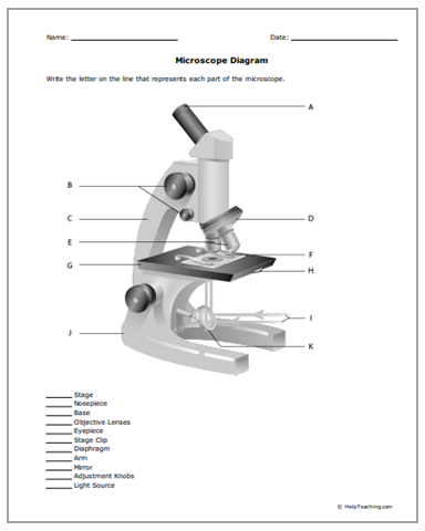 FREE Microscope Parts Worksheet - This free microscope