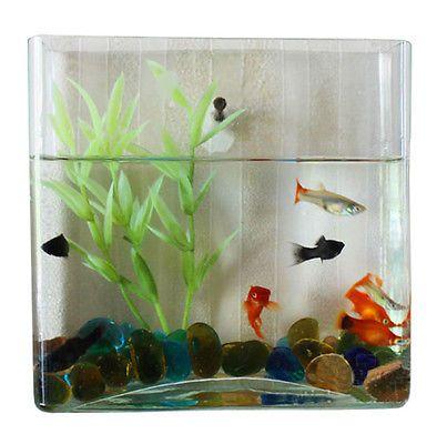 Wall Mount Hanging Betta Fish Bubble Aquarium Mini Bowl Tank