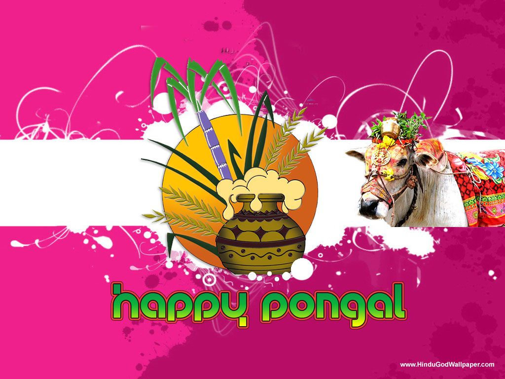Pongal Greetings Wallpapers With Wishes Free Download Pongal
