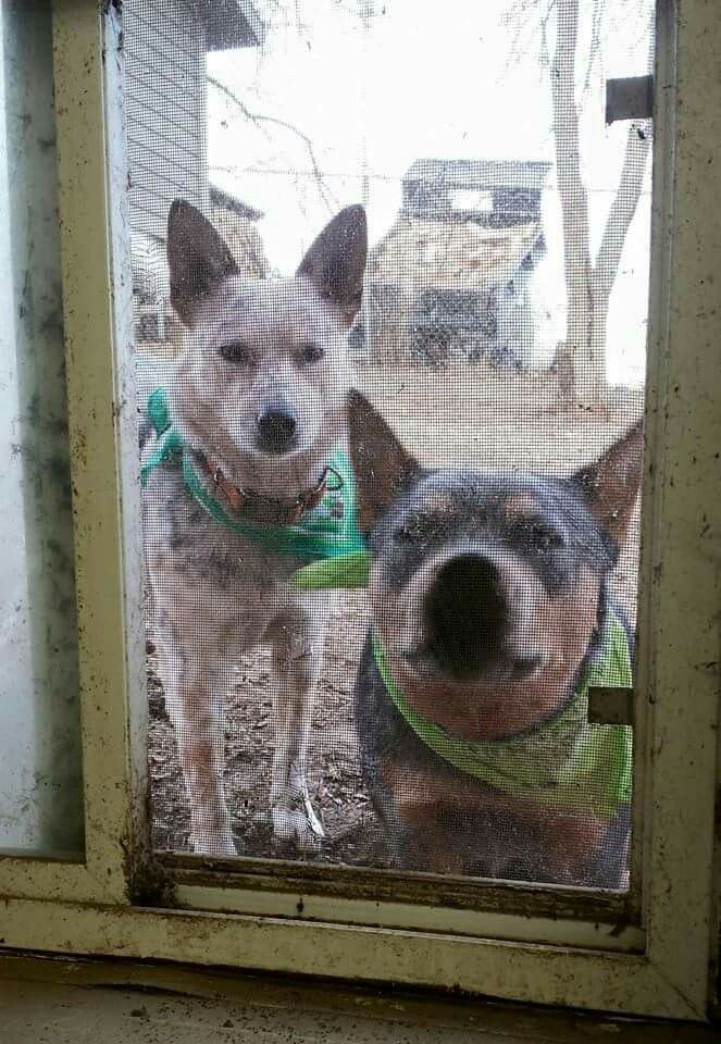 Come on Mom.....LET US IN!!!!!!