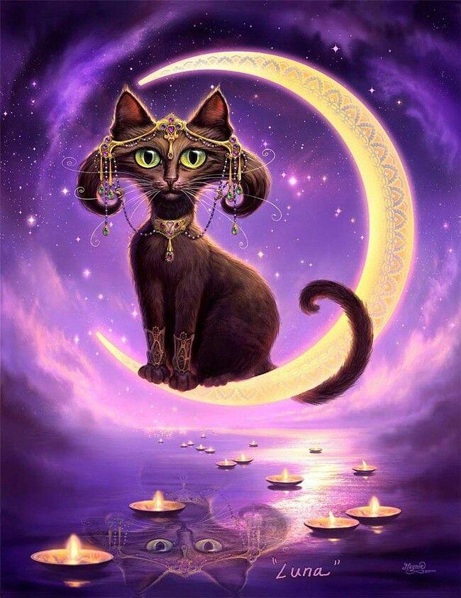 Волшебные картинки с котами