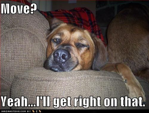 Love A Lazy Dog Funny Dog Captions Funny Dog Pictures Funny Dogs