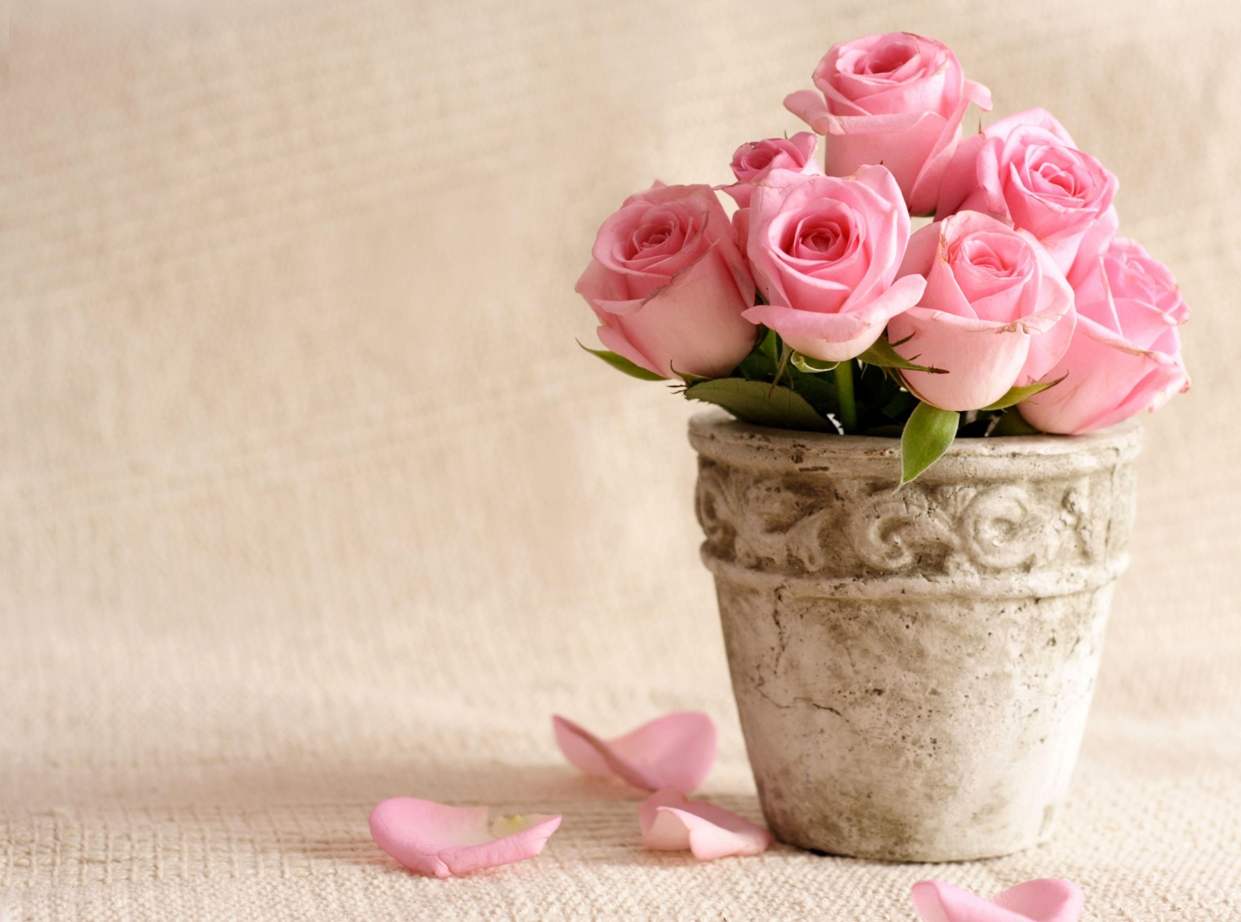 Pretty Flower Pot Pretty Flower Pot Images Pictures Wallpapers