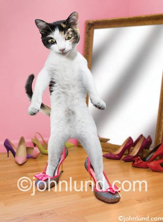 095954dc2bad2 Pin by Jim Clemson on Cats Wearing Shoes | Funny cats, Funny cat pictures,  Cats doing funny things