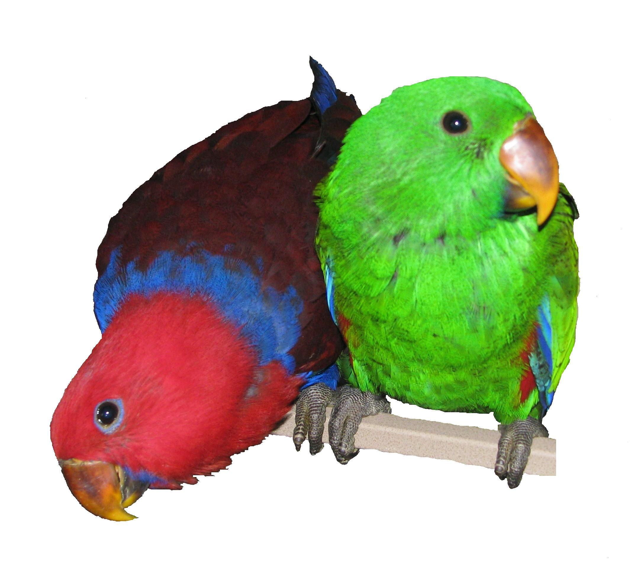 Canadian Parrot Breeder, Parrot Breeders