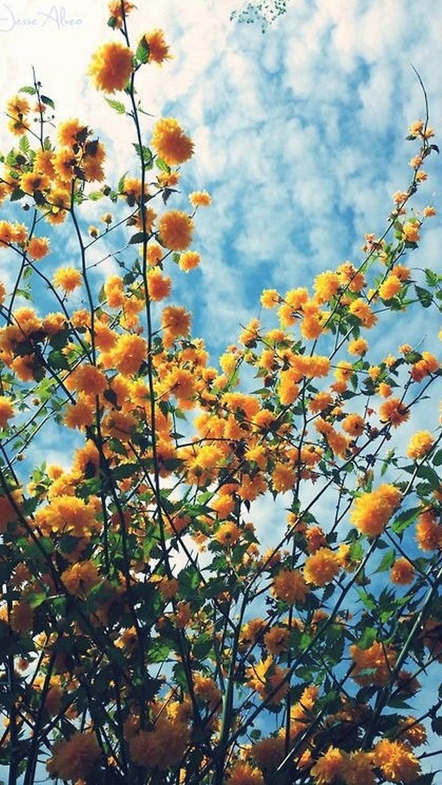 flores | Tumblr #yellowaesthetic